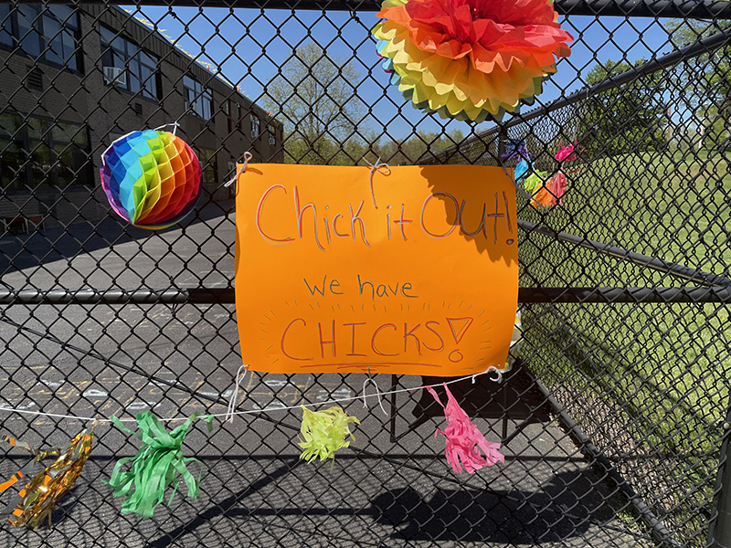 An orange sign hangs on a chain link fence. It says Chick it out! Chicks